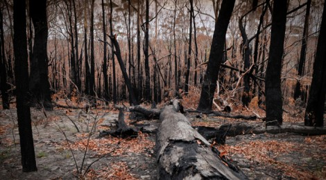 Did climate change contribute to the October Blue Mountain bushfires? > Check the facts